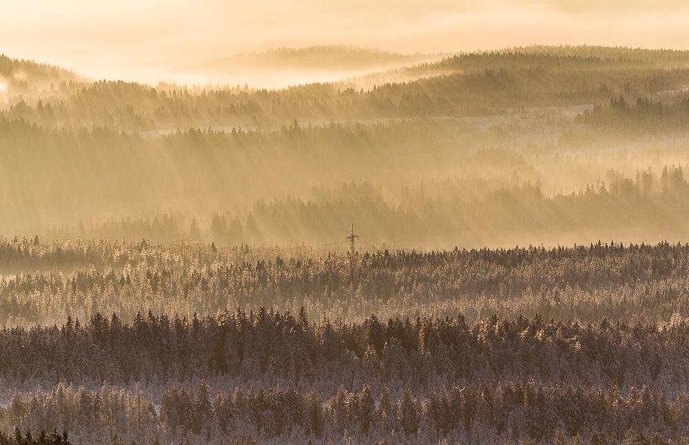Winternebel im Nationalpark Harz
