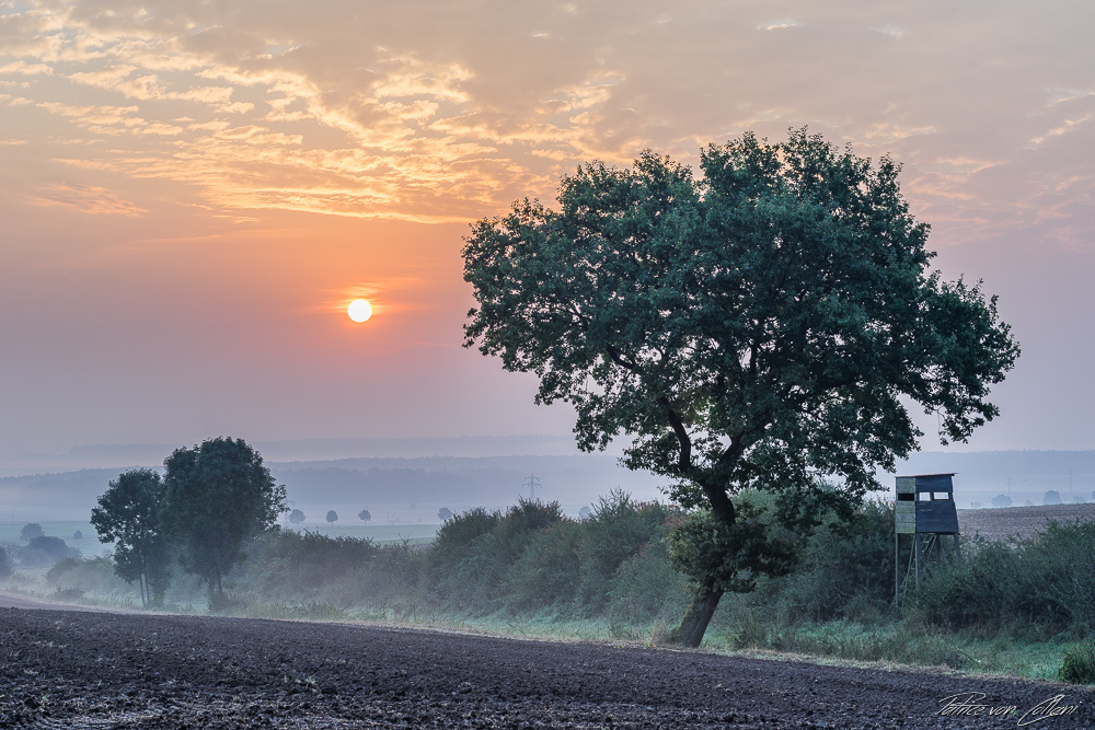 Herbst Nebel Hochsitz Sonne